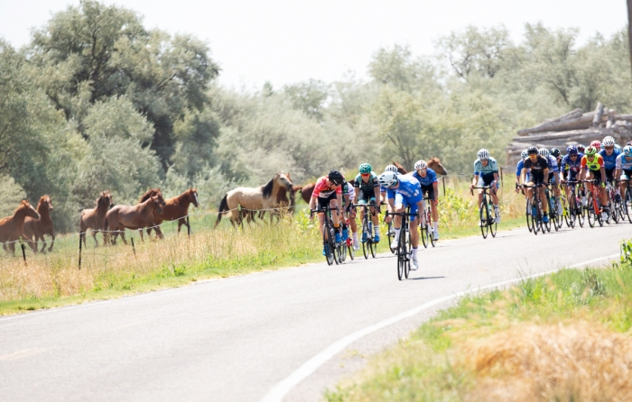 The horses are wondering why a break hasn't formed yet. Stage 2, 2019 Tour of Utah. Photo by Cathy Fegan-Kim