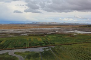 The wetlands of Lake Titicaca