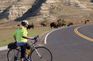 We have a standoff with bison in Theodore Roosevelt National Park.
