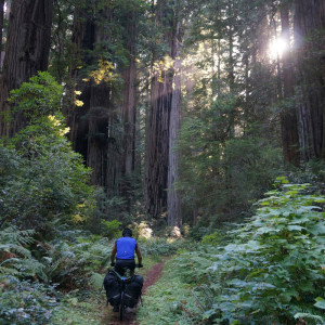 Sun rays filter to the forest floor. Believe it or not, we are riding