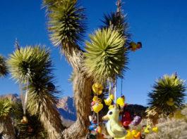 The Duck Tree. Photo: Kathleen Berglund