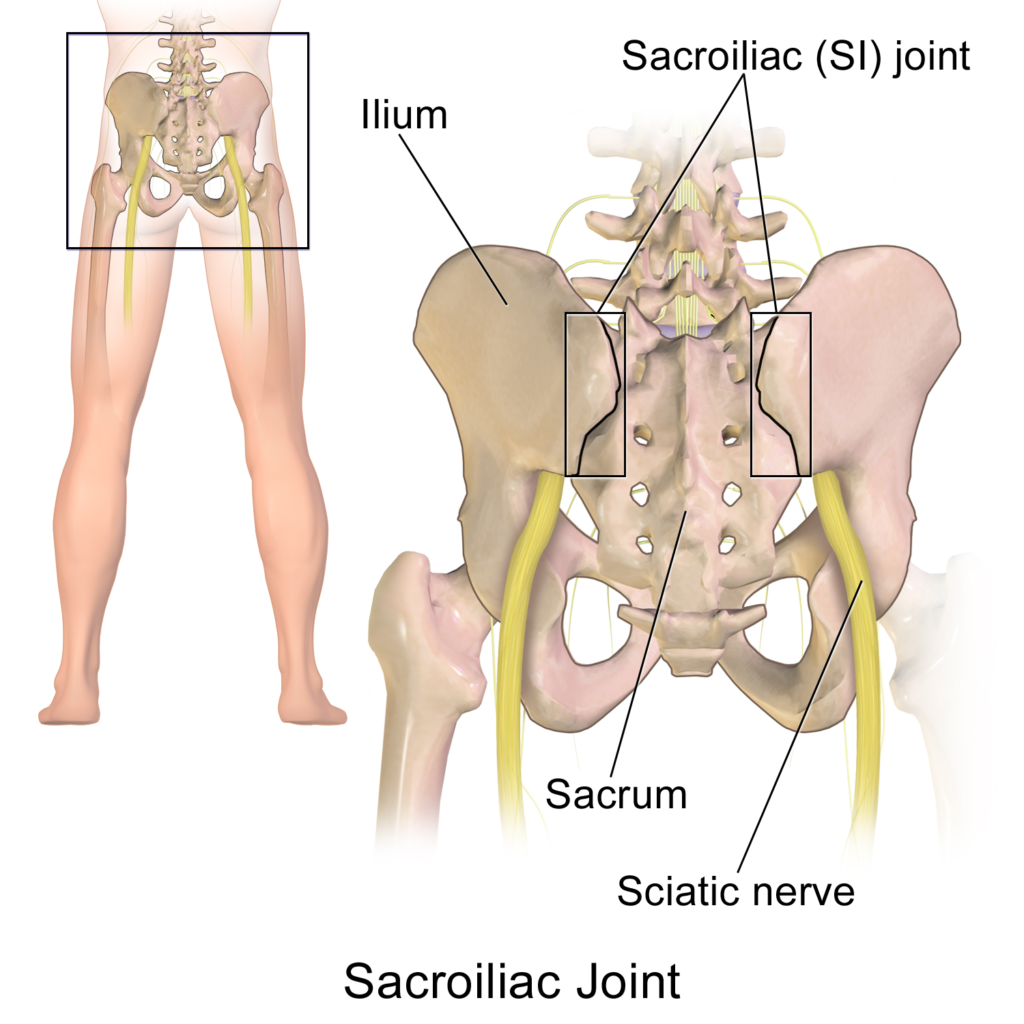 "Sacroiliac Joint (SI Joint). Image by Blausen.com staff (2014). ""Medical gallery of Blausen Medical 2014"". WikiJournal of Medicine 1 (2). DOI:10.15347/wjm/2014.010. ISSN 2002-4436"