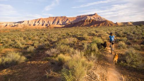 Cryptobiotic soil near mountain bike trails