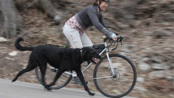 Commuting With Dogs – Tips for Riding With A Canine