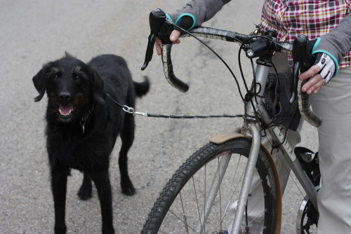 Chorney is on a short leash attached to the rear rack with a carabiner. Photo by Stephen Morningstar