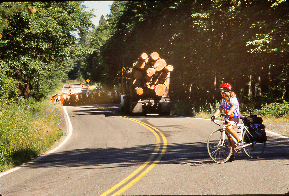 Early morning traffic near Callahan: cows and logging trucks. Photo by Howard Shafer