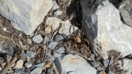 tarantula on bike ride