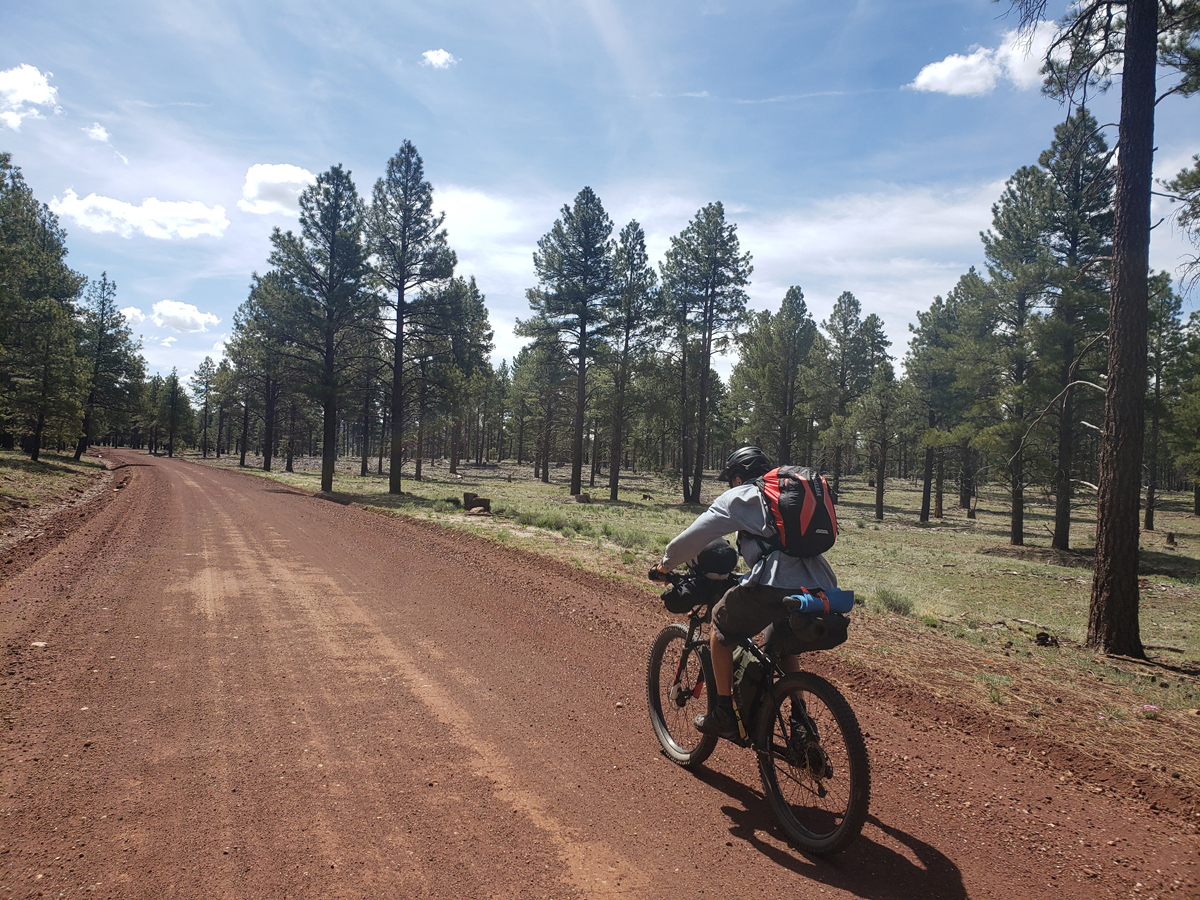 Wide, nicely graded roads between Williams and Parks, AZ. We enjoyed the pine forest and occasional views of Williams Peak above Flagstaff. On the Coconino Loop. Photo by Patrick Walsh